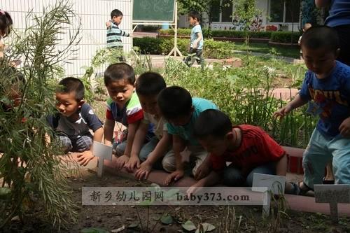 新乡市排名靠前的幼儿园
